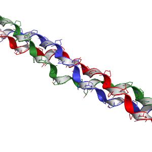 Protein Chain